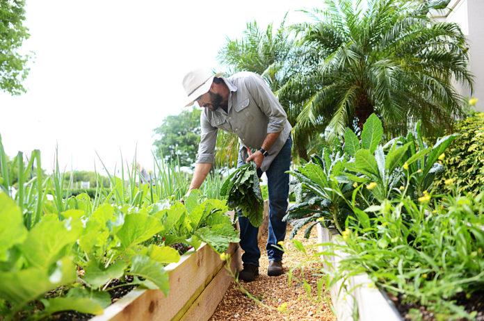 Venice-Magazine-Summer-2016-Farmer-Jay-Jason-McCobb-Nila-Do-Simon-Alissa-Dragun-Jr.-Sprouts-Pure-Organics