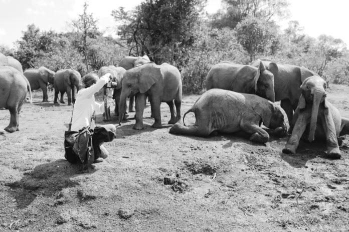 KT-Merry-Render-Loyalty-Photography-Animals-Photographer-Chad-Merry-Aventura-Fort-Lauderdale-Venice-Magazine-Charlie-Crespo-Kenya-Lewa-Wildlife-David-Sheldrick-Elephant
