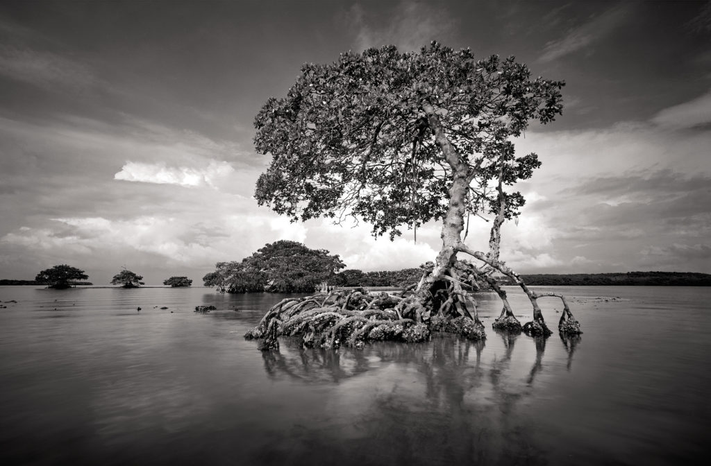 Clyde-Butcher-venice-magazine-gaskin-bay-fort-lauderdale-Florida-photography-winter-nila-do-simon-carlos-suarez