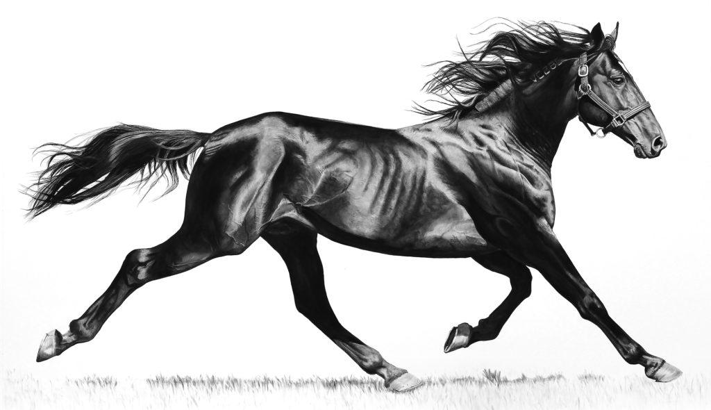 Virginia-Fifield-Charcoal-Drawings-Confirmation-2011-Dania-Beach-Tom-Austin-Kara-Starzyk-Venice-Magazine