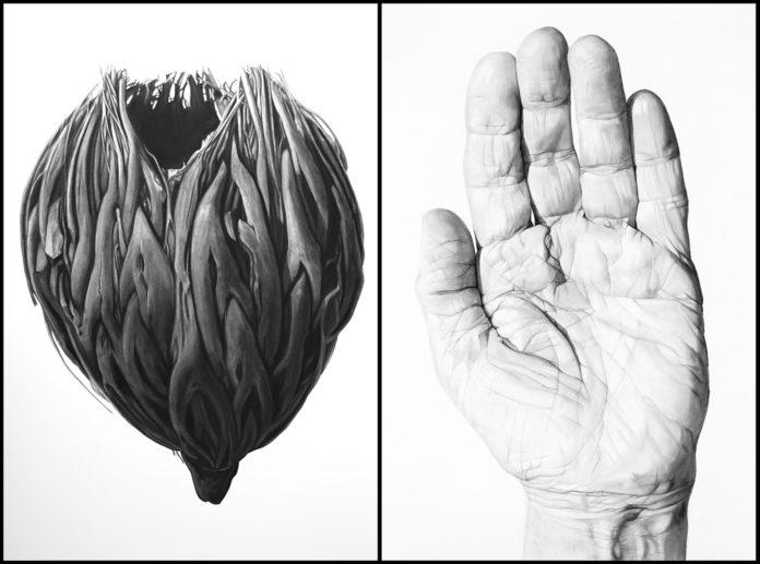 Las-olas-capital-arts-Jodi-Jeffreys-Tanner-rebecca-cahilly-taranto-venice-magazine-fort-lauderdale-virginia-fifield-Contemplation-Palm-Nut-Hand